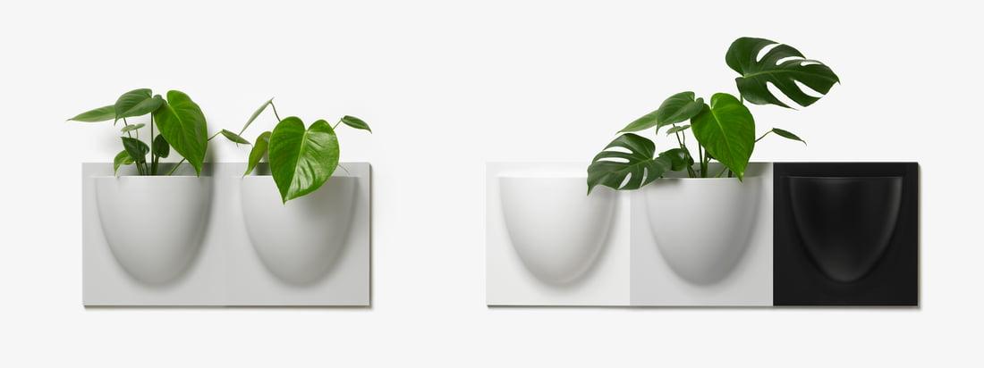VertiPlants – vægkrukke