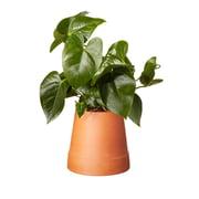 Boskke - Flipped Planter, terrakotta