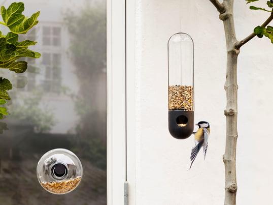 Fuglehuse – kategoriteaser