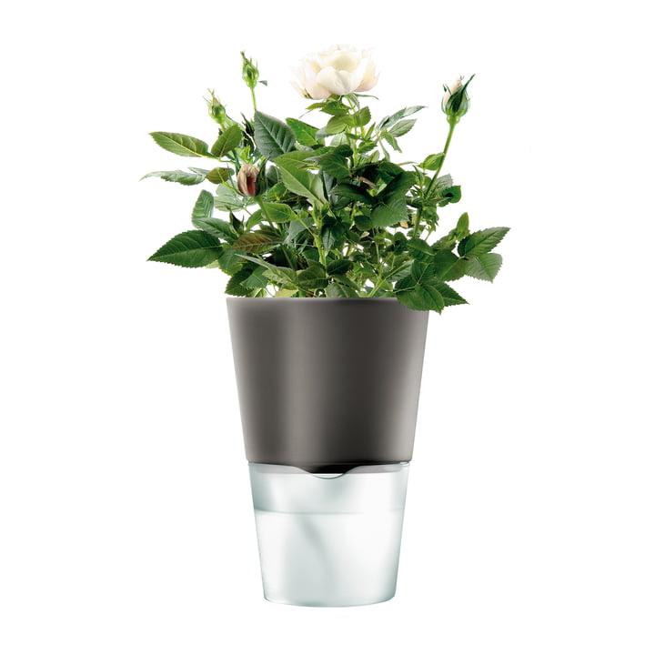 Selvvandende blomsterkrukke fra Eva Solo