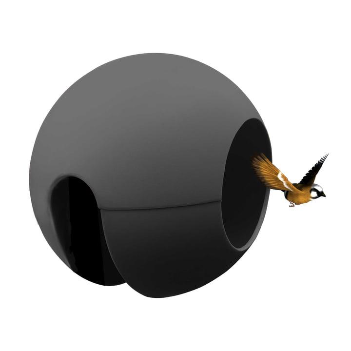 rephorm - ballcony birdball rephorm ballcony birdball i grafit