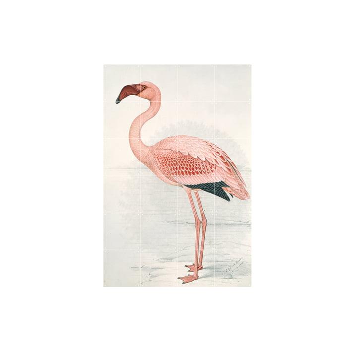 Flamingo (Finch-Davies) fra IXXI i 80 x 120 cm