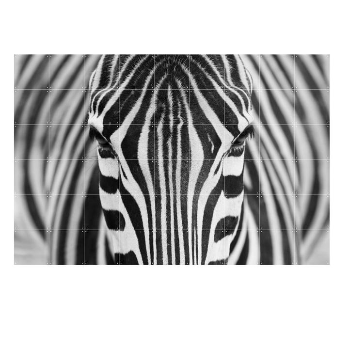Zebra fra IXXI i 180 x 120 cm