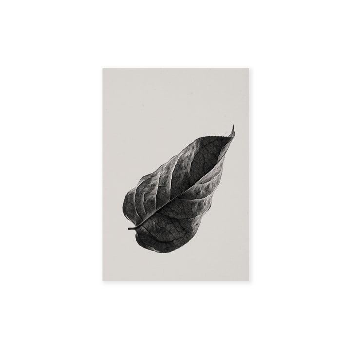 Sabi Leaf 01 30 x 40 cm fra Paper Collective
