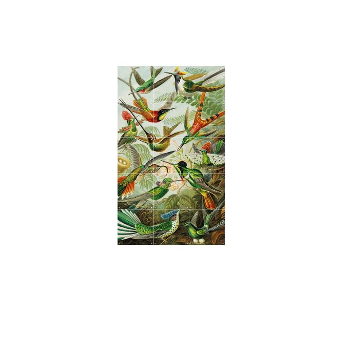 Kolibrier (Haeckel) 60 x 100 cm af IXXI