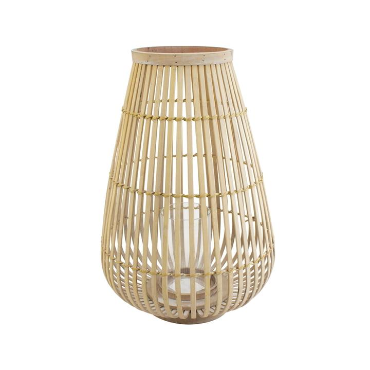 Stor bambuslygte i natur