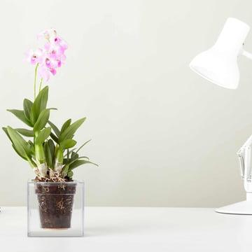 Boskke – Cube, gennemsigtig